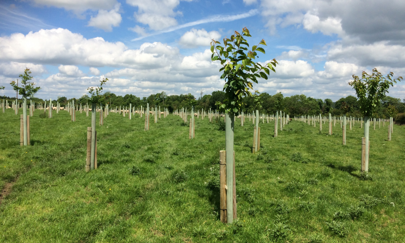 agroforestry-offaly