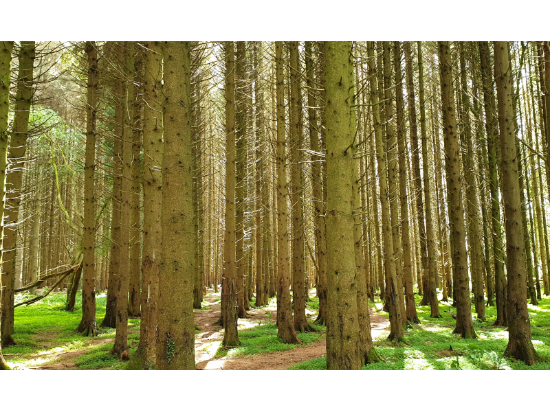 forestry-grants
