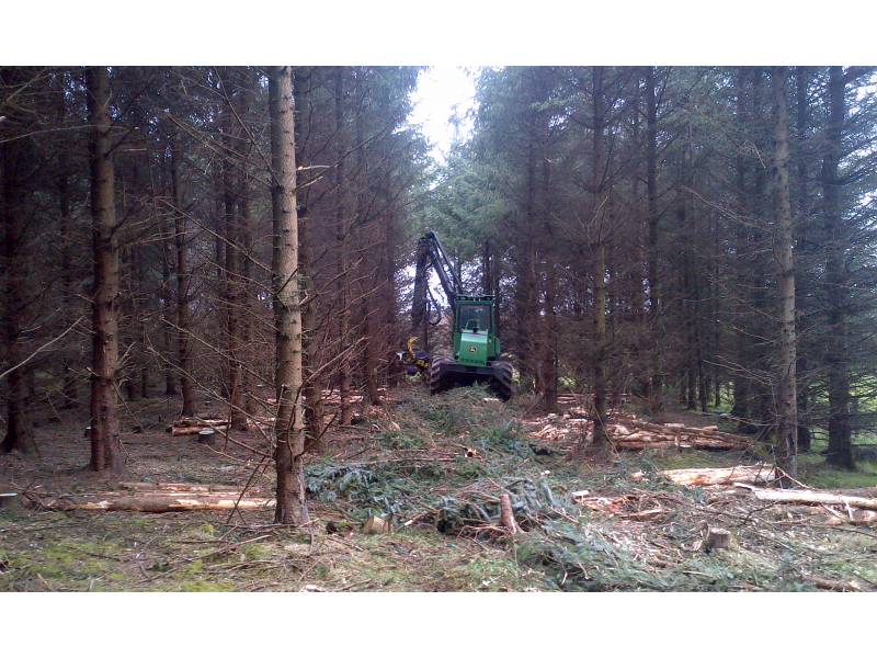 forestry-management-1